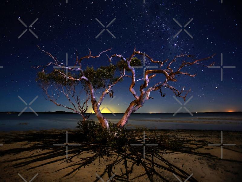 The tree by Mel Brackstone