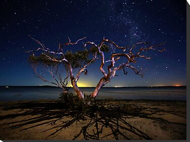 The tree by Mel Brackstone