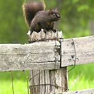 A RAT with a Fuzzy Tail by Larry Llewellyn