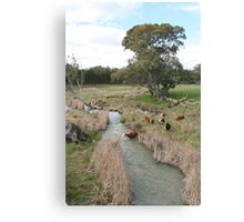 """""""Cattle Crossing"""" Canvas Print"""