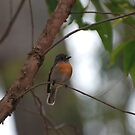 Tiny little Robin. by Michelle *