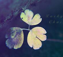 Lucky Charm by Stephanie Hillson