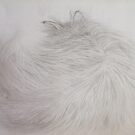 The Killer Chinchilla Sleeps - Fur Detail Pencil Sketch by PERUGINA