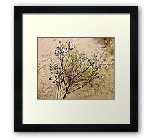 Beach Weeds Framed Print