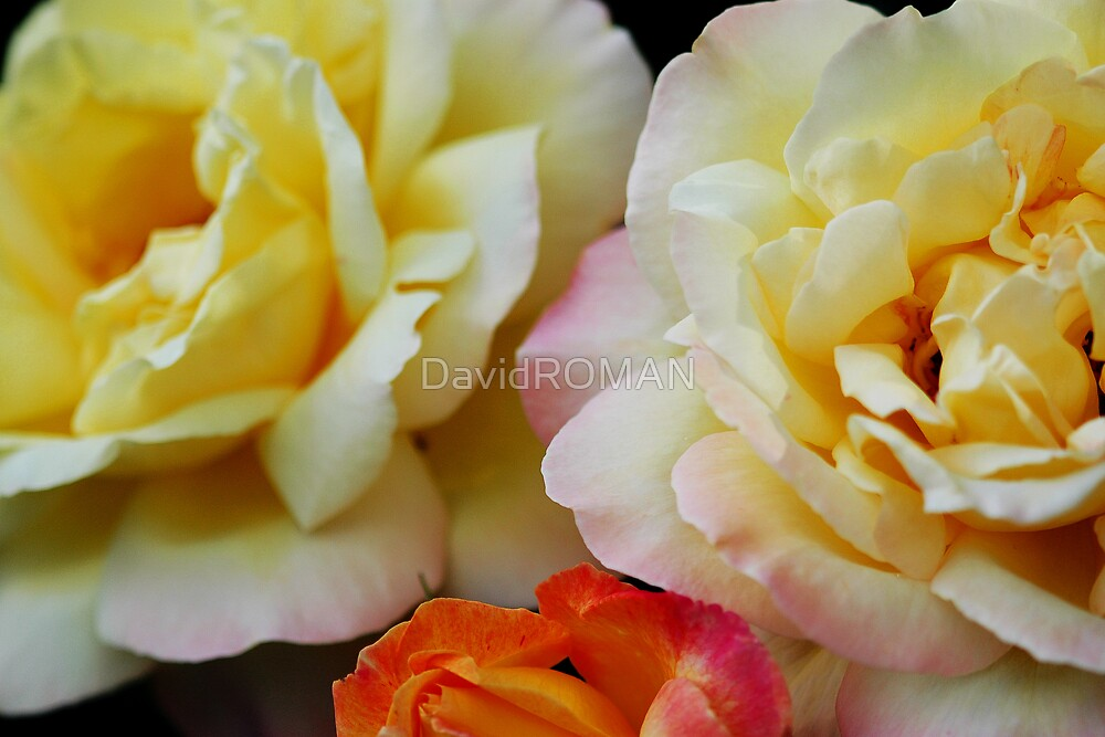Peaches and Cream by DavidROMAN