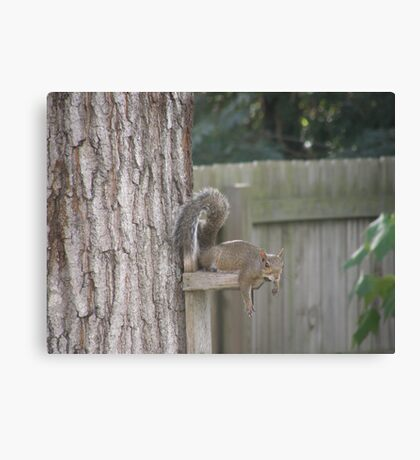 Got Peanuts ??? Canvas Print
