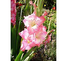 Pink Gladiola Photographic Print