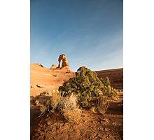 Utah Juniper - Arches National Park, Utah Photographic Print