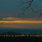 Looking for morning by Jim Caldwell