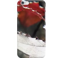 Sweet Gum Leaves in Sunlight II iPhone Case/Skin