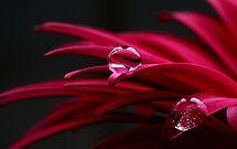 Jewels by Kathy Reid