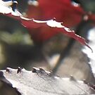 Sweet Gum Leaves in Sunlight III by Nadia Korths