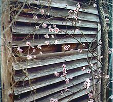 Peach Blossoms by Sheila Simpson