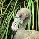 Baby Flamingo by Kristin Nichole Hamm