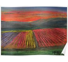 Tulip Fields at Sunset Poster