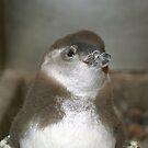 Baby Penguin by Kristin Nichole Hamm