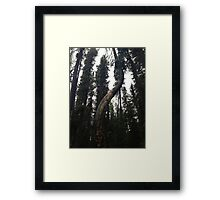 Twisted Trunk Framed Print