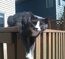 Posing Cat  by Elleandtwiler