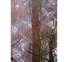 Spiderweb in the mist Photographic Print