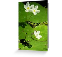 Water Pads Greeting Card