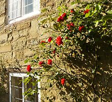 Old cottage with climbing roses by Georgiana
