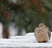 Cold Snooze by Debbie Oppermann