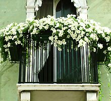 White Petunia Balcony by Donna Corless