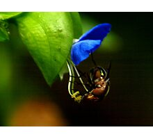 insect study Photographic Print
