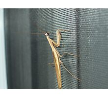 unexpected guest Photographic Print