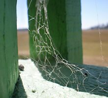 Unseen Spider Web by Leahkate