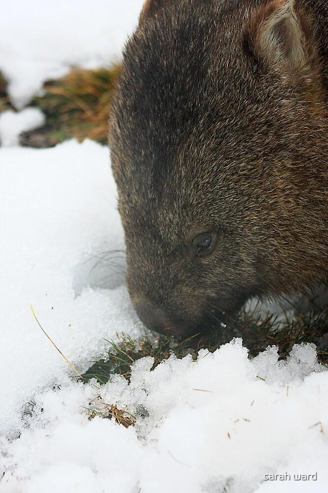 wombat by sarah ward