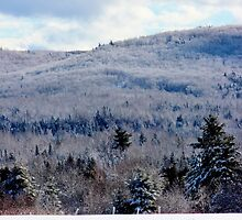 There is Ice on Them Thar Hills! by Kathleen Daley