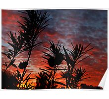 """""""Silhouetted Dawn"""" Poster"""
