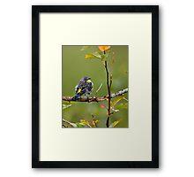 Small Bird: Big Charm Framed Print