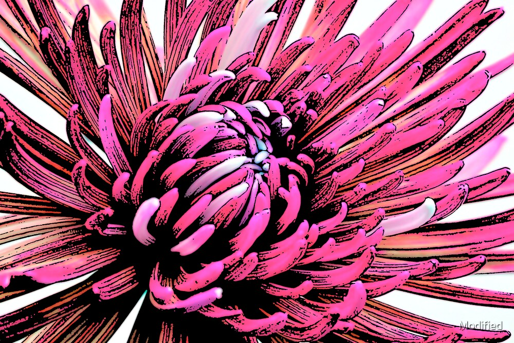 Pink Crazy Flower by Modified