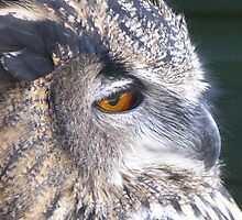 Indian Eagle Owl  by Marilyn Harris