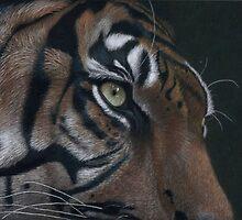 tiger face colour pencil by Rasberry6