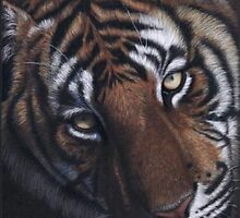 tiger in colour pencil by Rasberry6