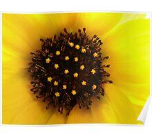 Sunflower... Poster
