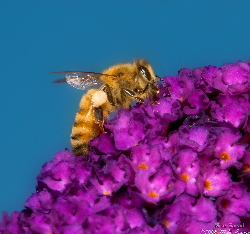 The Humble Bee by Mike  Savad