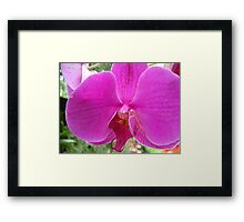 pretty pink orchard flower nature pattern. Framed Print