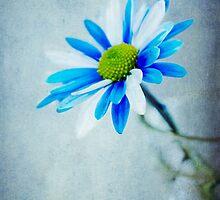 Blue & White  by Nicole  Markmann Nelson