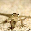 lizard by sparrowdk