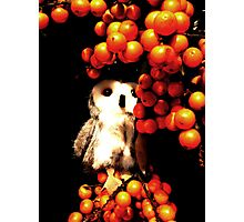 Seeing Orange Photographic Print