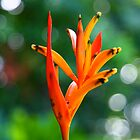 Bird of Paradise by Erland Howden