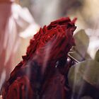 roses in plastic by beebite