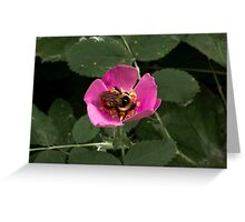 Wild Rose with Bumble bee Greeting Card