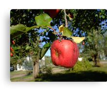 Hanging Apple in a Tree Canvas Print