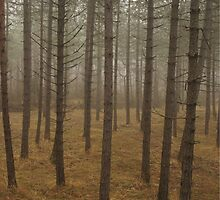 pine forest by phonetic