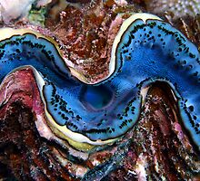 Giant Clam  by Anders Hollenbo